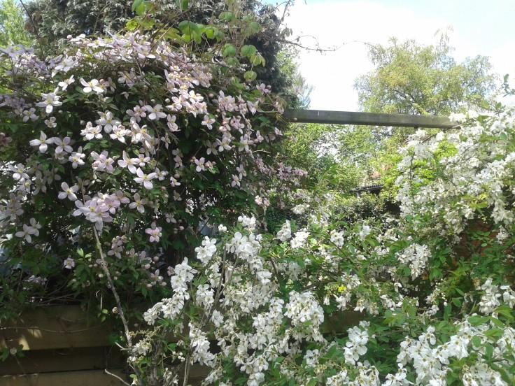 Bij mij in de tuin